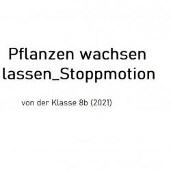 Pflanzen wachsen Stopmotion, Jg.8, 2021