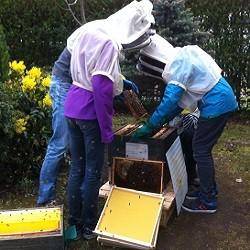 Ganztag: Neues von der Bienen-AG