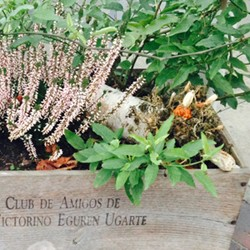 Ganztag: Urban Gardening